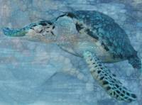 Turtle - Beneath The Waves Series