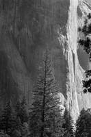 Face of El Capitan, Yosemite (B&W)