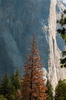 Face of El Capitan, Yosemite