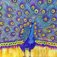 Moroccan Peacock Art Prints & Posters by Miriam Schulman