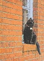 SILK SCREEN OF A BLACK CAT ON WINDOWS SILL
