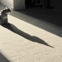 Batcat 007 by Richard Thomas