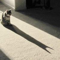 Batcat 006 by Richard Thomas