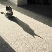 Batcat 009 by Richard Thomas