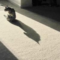 Batcat 008 by Richard Thomas