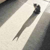Batcat 005 by Richard Thomas