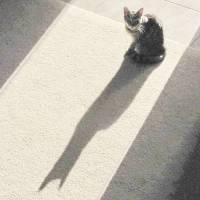 Batcat 004 by Richard Thomas