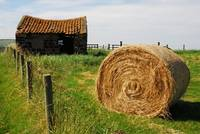 Haybale on coastal path
