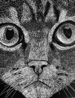 Scratchboard Cat Face