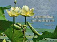 Heraclitus Quote on Waterlily Photo