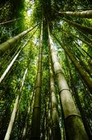 Bamboo forest green trees perspective growth