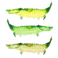 Three green crocodiles