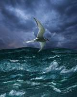 Voyage of the Arctic Tern