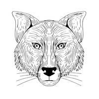 Fox Head Front Drawing