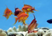 Anthias Playground