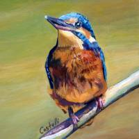 kingfisher2 Art Prints & Posters by Anna Castelli
