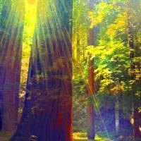 Redwoods Rainbow Art Prints & Posters by Kat Besthorn