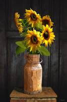Sunflowers in Copper Milk Can