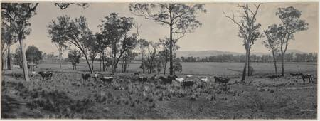 Panorama of Government Stud farm, Coolangatta Esta