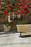 Bench by the Bougainvilla