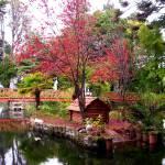 """parque Isidora Goyenechea de Cousiño, Lota"" by chesstercl"