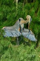 Heron Wing Pose