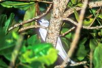 Seychelles National But Elusive Bird