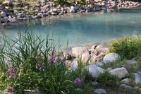 Lake Louise with Wildflowers and Weeds