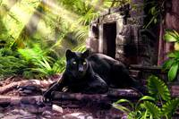 Black leopard in the cool of the jungle