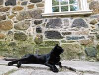 Black Cat At Poe Museum
