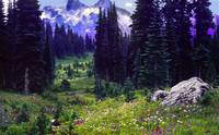 mt rainier meadow panoramic watercolor z