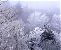 smoky mtns icey dawn z
