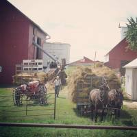 Amish Haying Time Art Prints & Posters by Cassie Peters