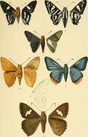 Vintage Moth Illustrations