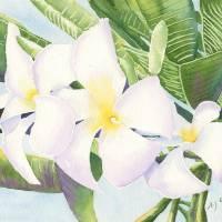 Frangipani Art Prints & Posters by Yvonne Carter