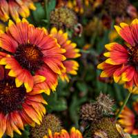 In The Summer Garden Art Prints & Posters by Kirt Tisdale