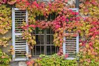 Shutters and Vines