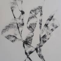 B.H.Art.CharcoalOnPaper.Dancing.in.the.Wind Art Prints & Posters by Barbara Helen Zeolla