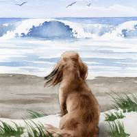Long Haired Dachshund at the Beach Art Prints & Posters by David Rogers