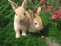 Bunny Rabbits In The Garden