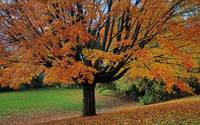 Autumn Tree Splendor