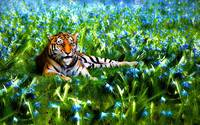 Bengal Tiger Rests In Blue Bell Flowers
