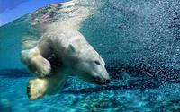 White Polar Bear Underwater