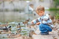 Boy Feeds The Ducks