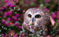 Owl Plays In The Flowers