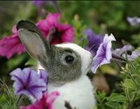Bunny Rabbit Sniffing Flower