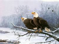 Bald Eagles In The Snow