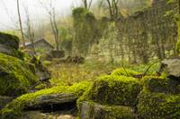 Moss and stone house