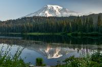 Mount Rainier at Reflection Lake with wildflowers