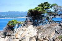 Point Lobos_10 09 09_09